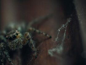 رؤية العنكبوت فى منام الحامل والمتزوجة والعزباء