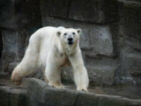 تفسير رؤية الدب فى المنام